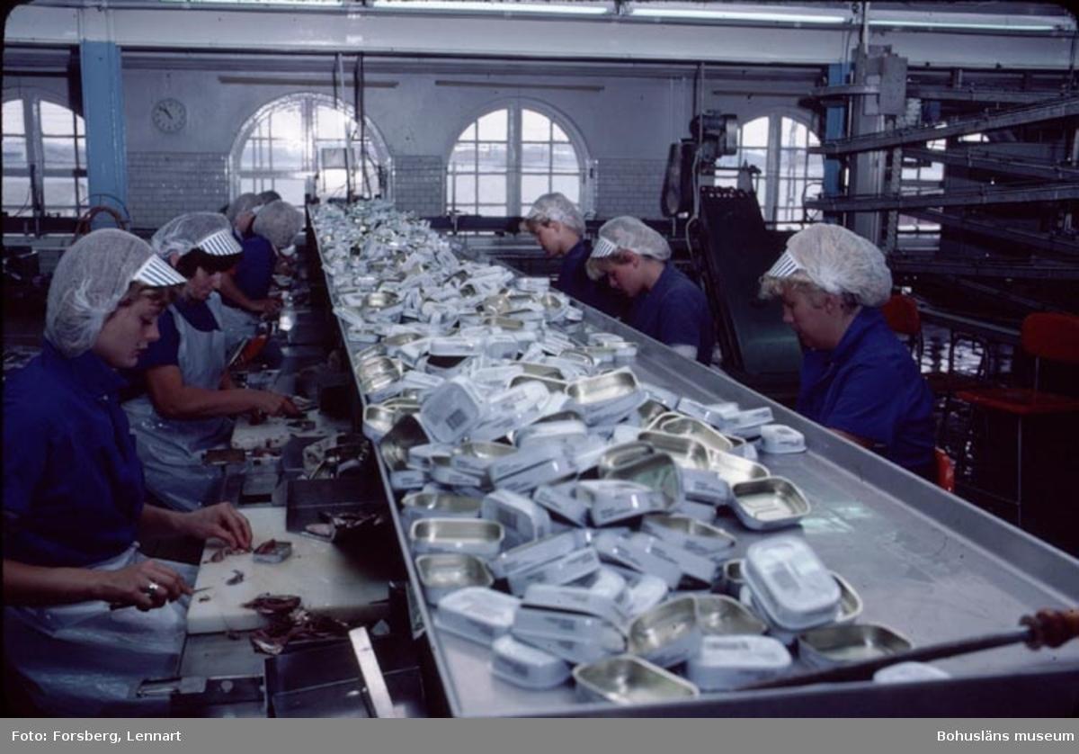 Abbas konservfabrik i Lysekil 23 augusti 1983.  Bilderna tagna inför presentation på landstingets kulturnämnd av konservindustrirapporten (Bohusläns samhälls- och näringsliv).  Fotograf: Lennart Forsberg.