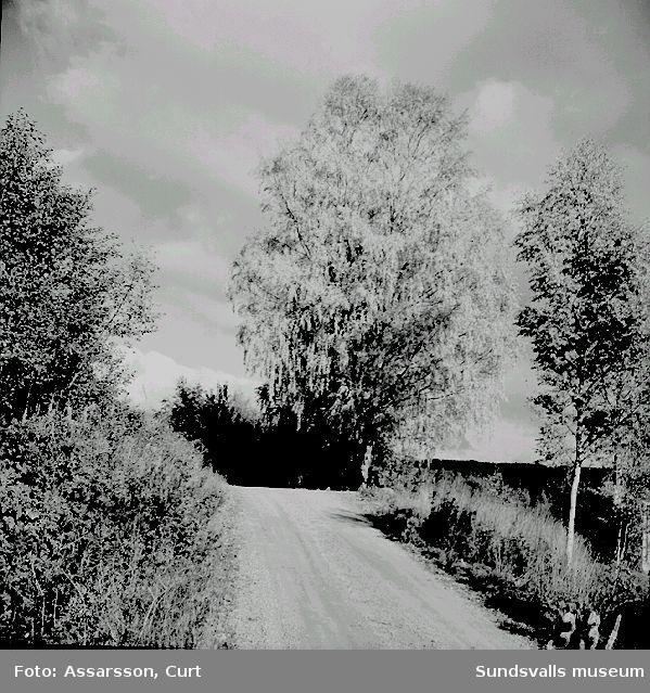 Höststämning vid Långsjön, Tuna.
