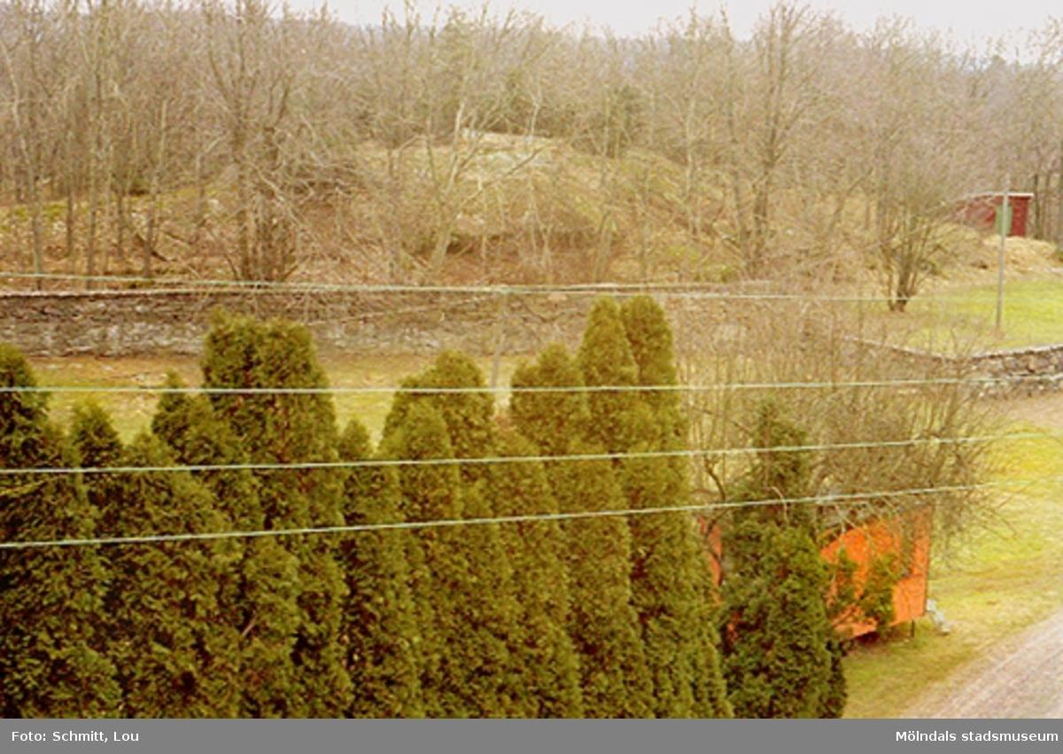 Gunnebo slottsträdgård med träd i förgrunden och en mur i bakgrunden.
