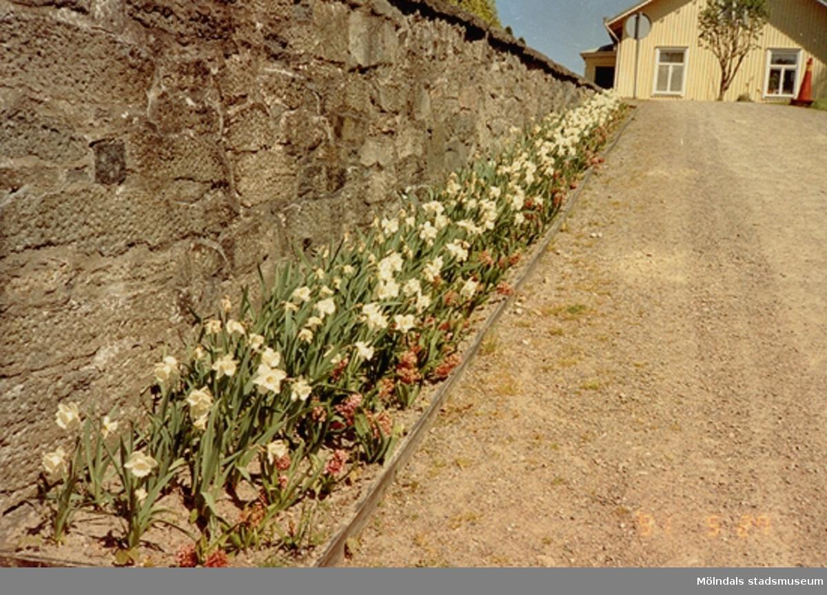 En stenmur, blomsterrabatt och grusväg som leder från Gunnebo slott till ett bostadshus åt öster.  Mitt emot bostadshuset byggdes senare Mölndals turistbyrå. Maj 1991.