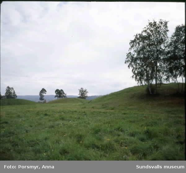 Vy från Högoms gravfält