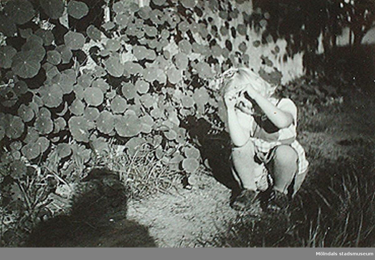 """""""Vår sölgris nummer ett, dess make Emilsson (Margit Wannerberg ogift) aldrig sett.""""Fotot sitter i albumet (invnr: 03395) """"Krokslätts daghem, Dalhemsgatan 7, Mölndal.2 juni 1948 - 30 sept 1951""""illustrerat av Ruth Karlsson."""