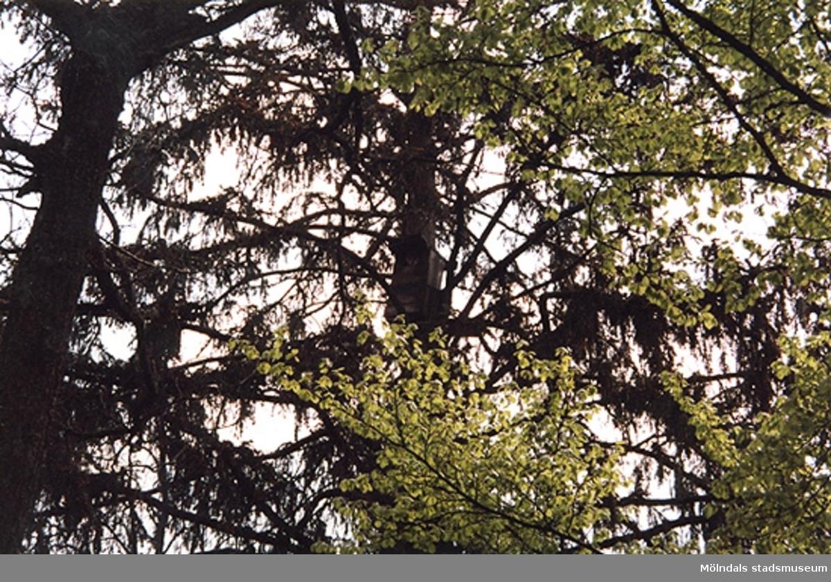 Lackarebäcksskogens träd.