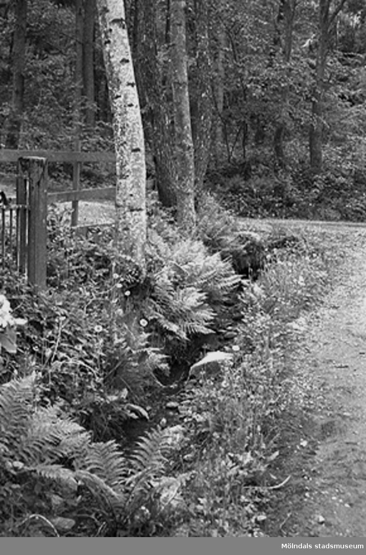 Vägkant vid väg norr om Lindomeån (från Hällesåkersskolan - Raneredsvägen), juni 1993.