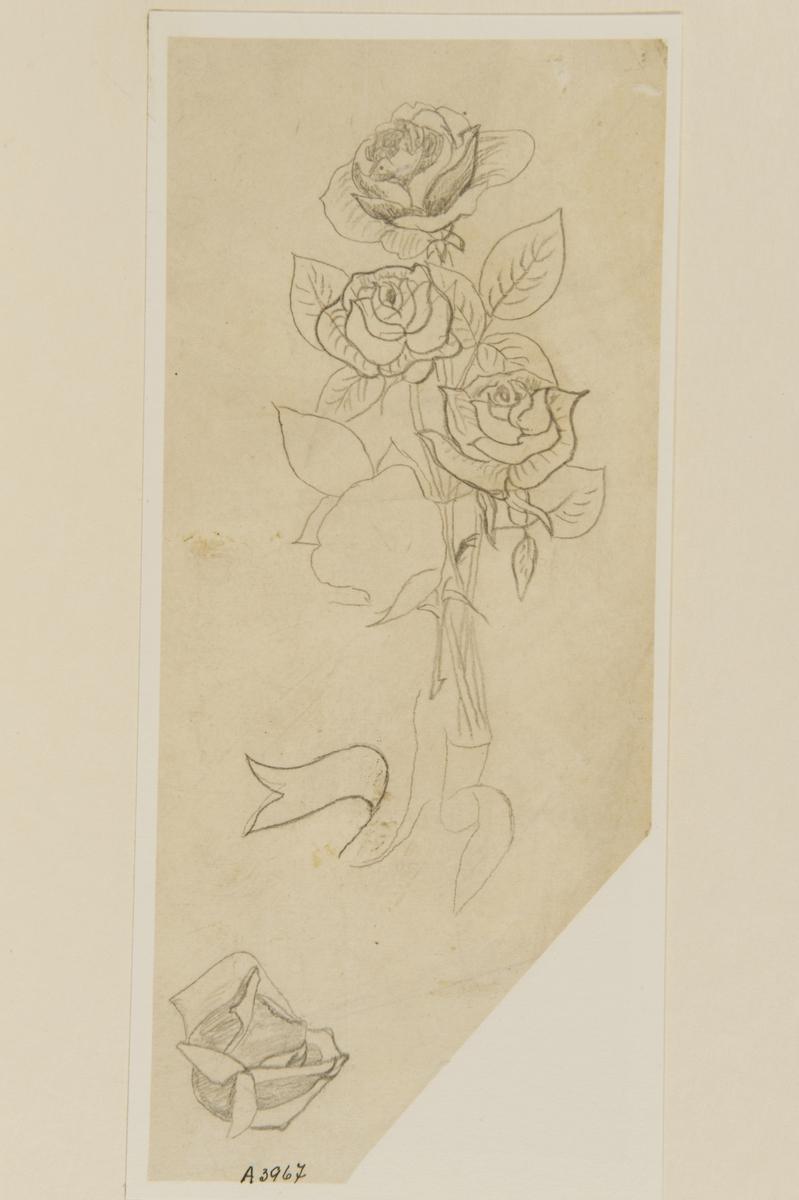 Tatueringsförlaga. En bukett av tre rosor med ett band.