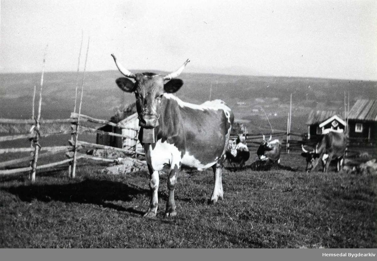 Flatovollen på Nøreli i Gol i 1936.