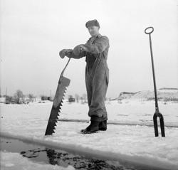 Isskjæring på Møkkelandsvannet, 1954. Mann arbeider med issa