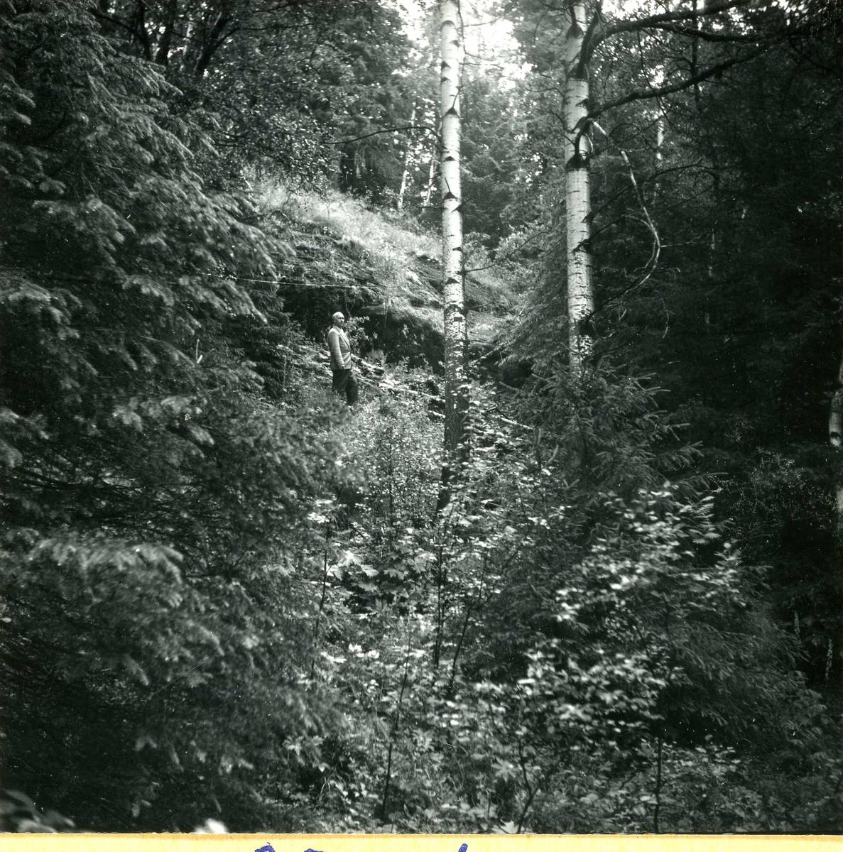 Tilløpstunnel frå Vesås. Inspeksjon av skog