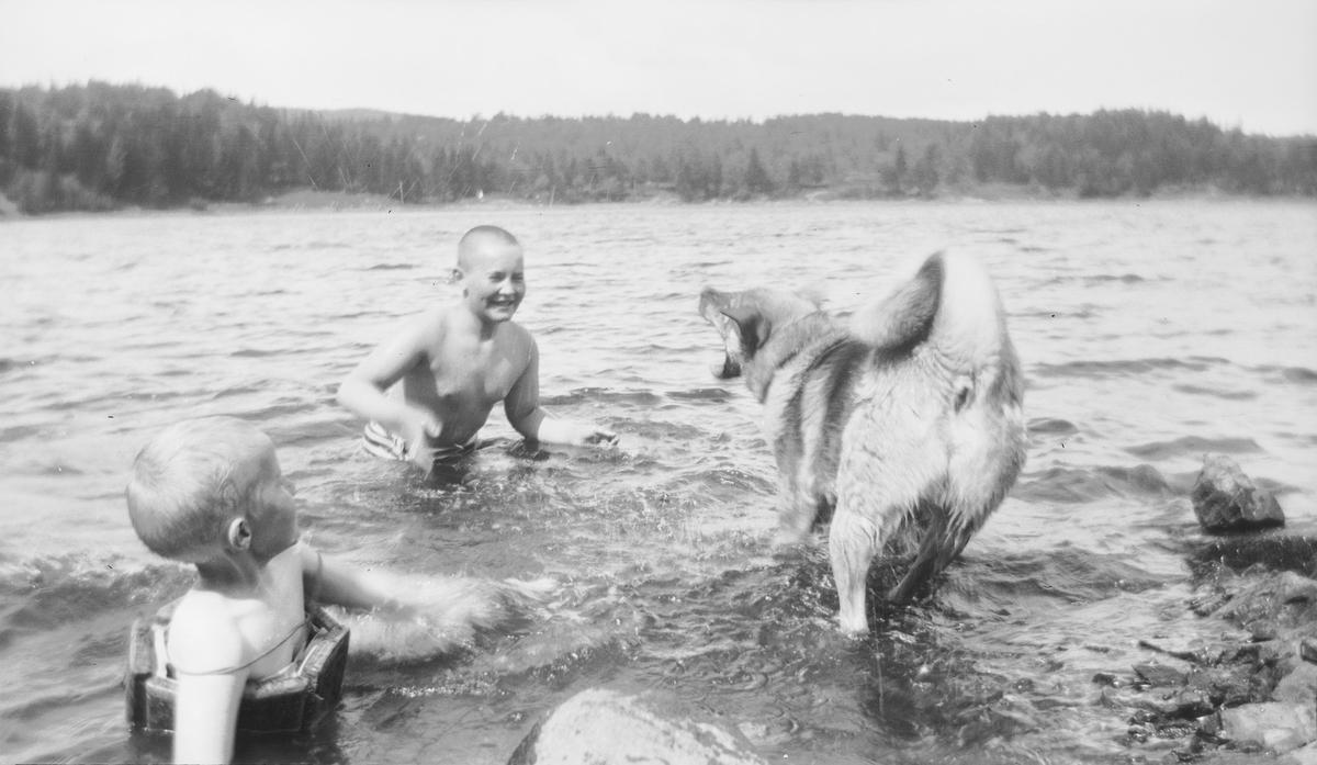 En elghund bjeffer mot to smilende gutter, en liten og en stor, som bader. Guttene ser ut som de vil sprute vann på hunden.
