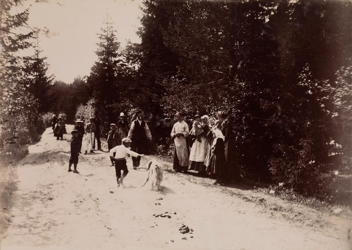 """""""Skovbrand"""" Mange mennesker og en hund på en skogsvei."""
