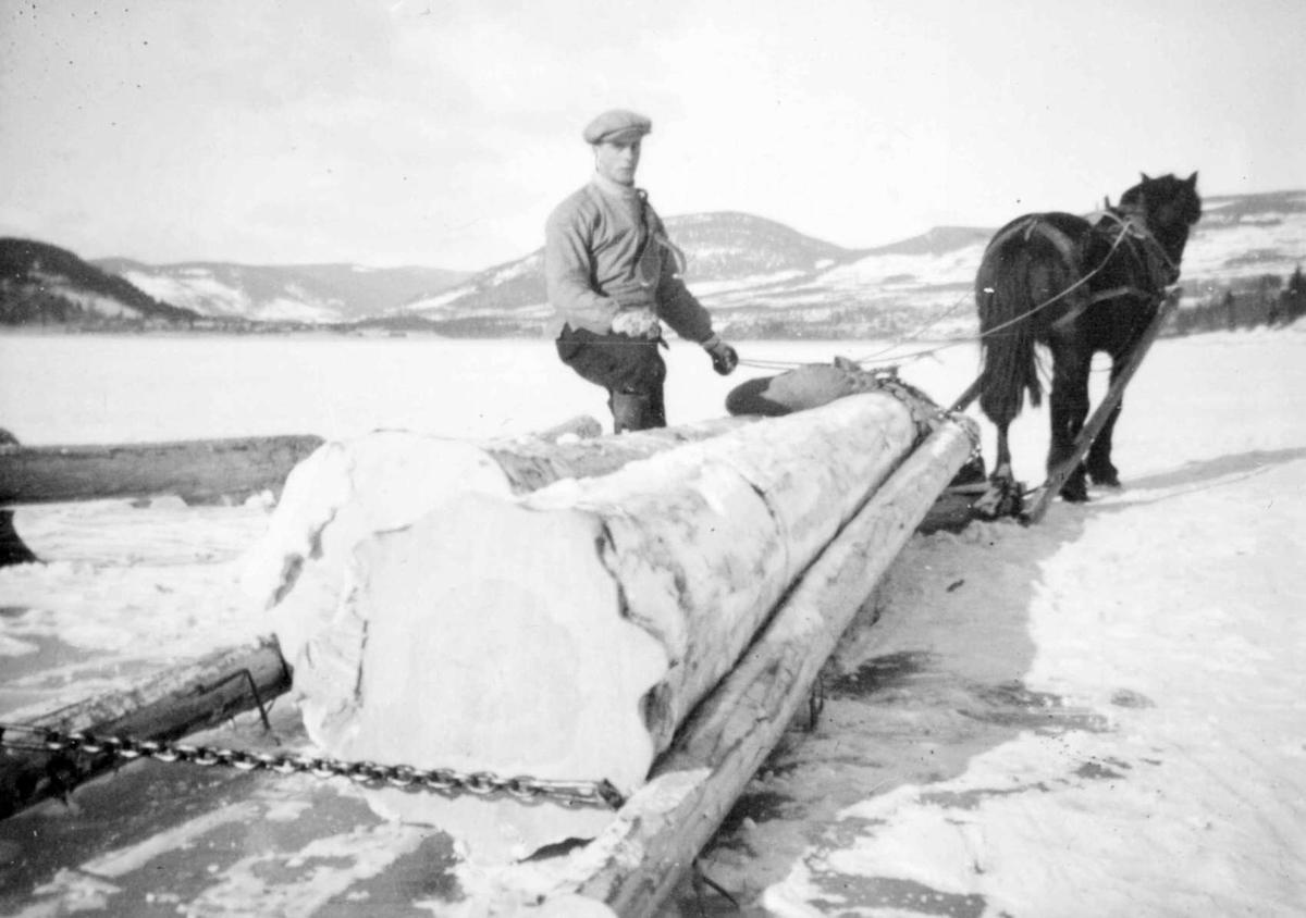 Repro: Tømmerkjøring med hest og slede, vinterbilde.