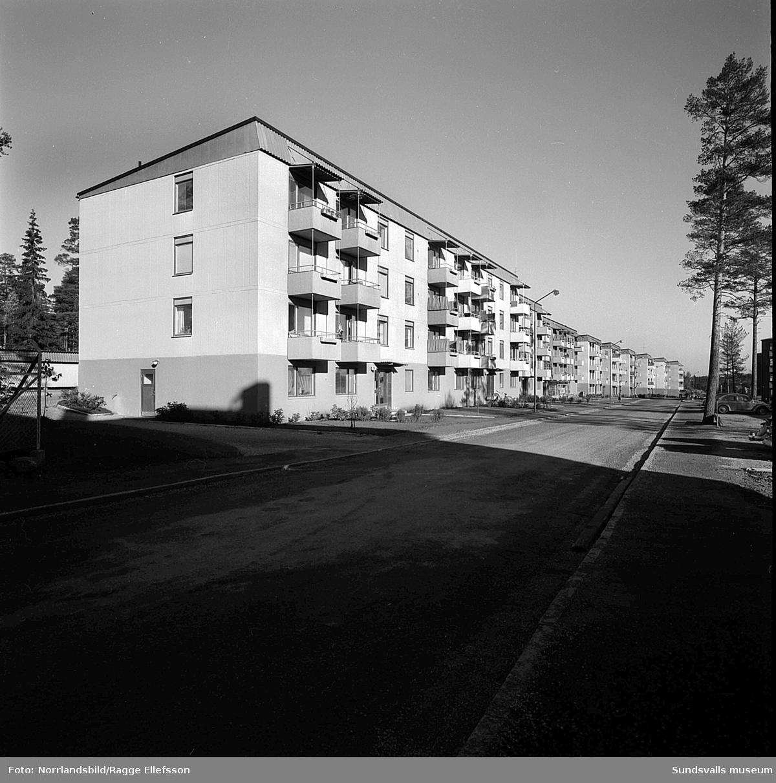 Kvarteret Stammen vid Tallrotsgatan i Haga.