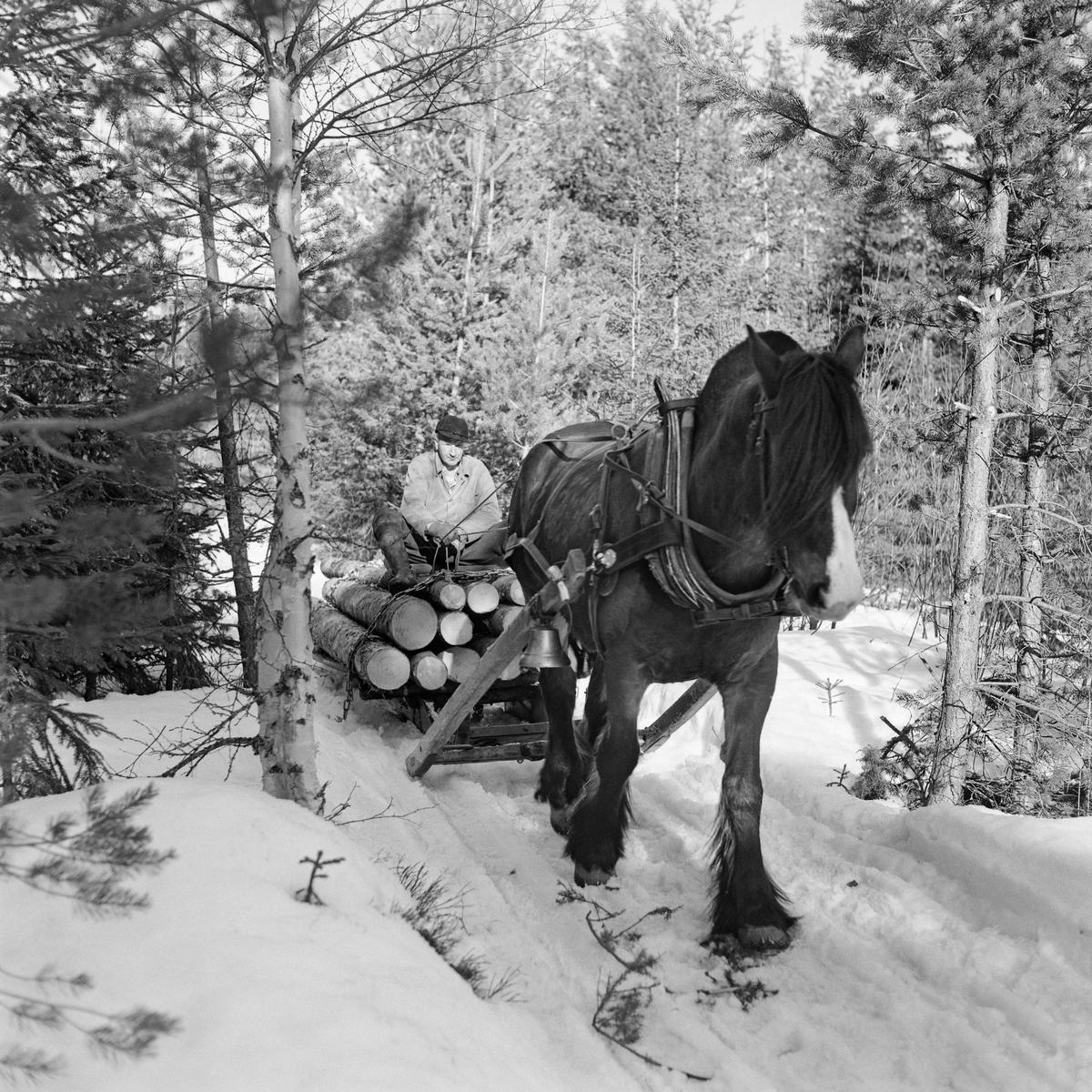 Tømmerkjøring med hest i Stavåsen 1971 (Foto/Photo)