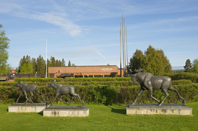 Deler av elgskulpturen ved innkjøringa til Norsk Skogmuseum 16/6 2015