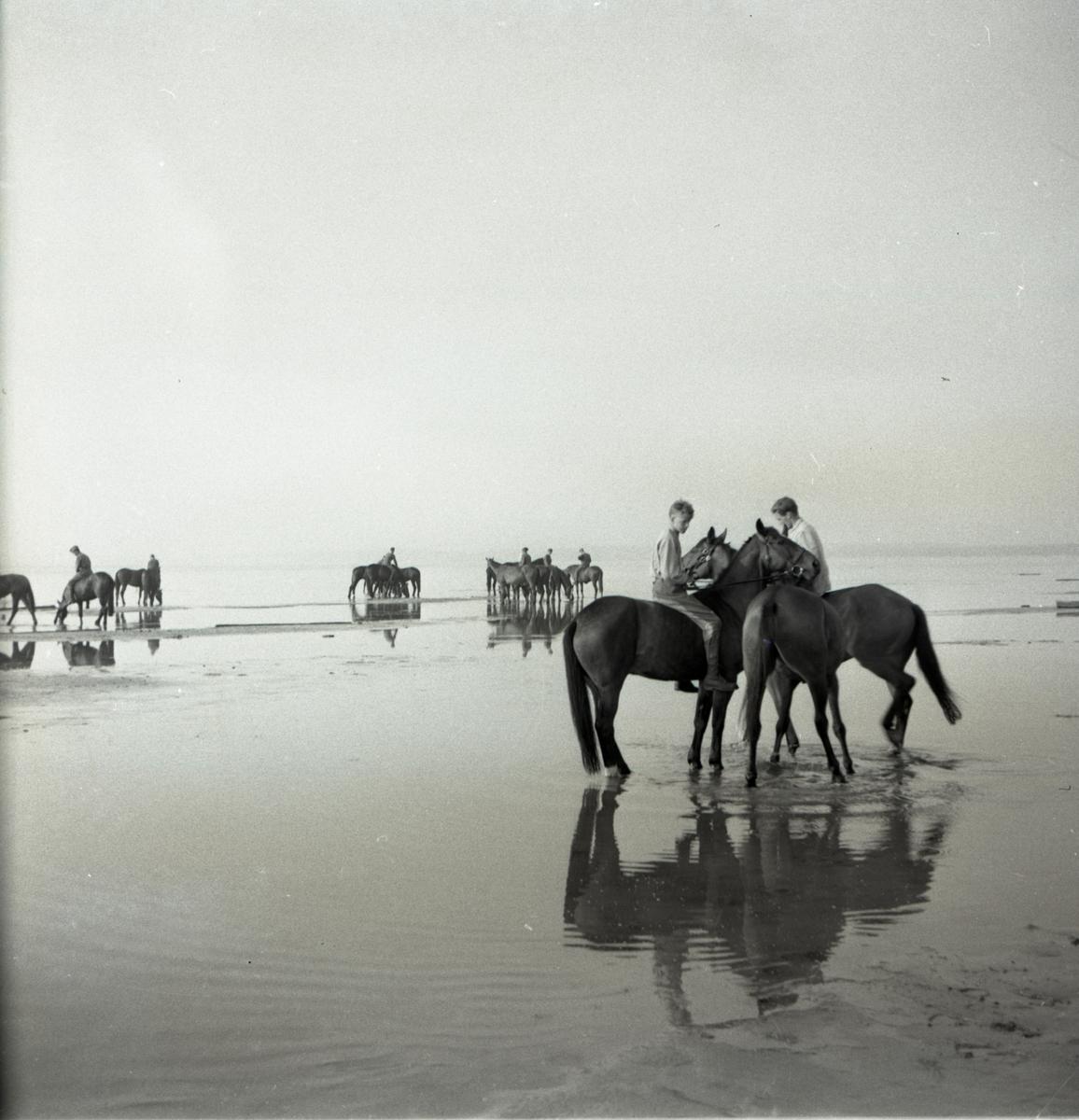 Värnpliktiga på stranden med sina hästar.  Norrlands dragonregemente K4, Umeå, 1955-1956.