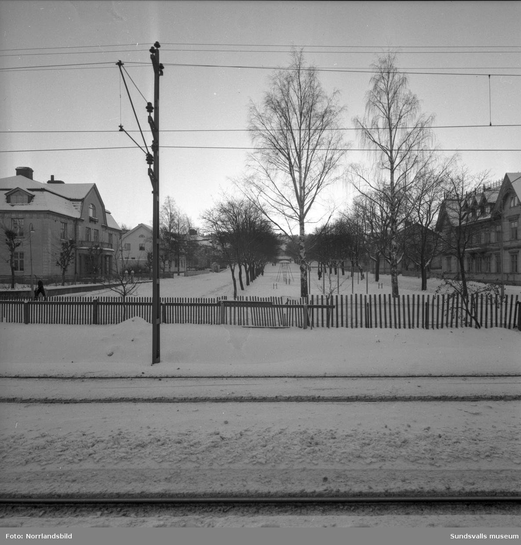 Vinterbilder på parken i Esplanaden söder om järnvägen, fotograferat från järnvägen och rakt söderut.
