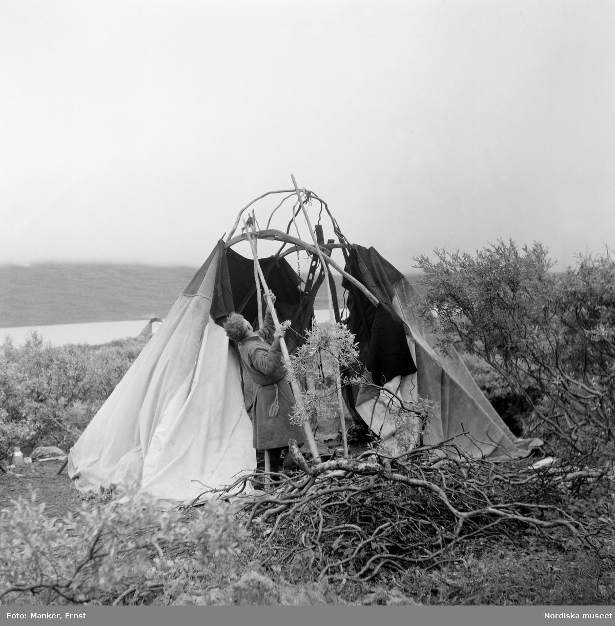Mattias Kuoljok river familjens kåta för höst-sommarflyttningen. Under Nordiska museets Lappmarksinventering.