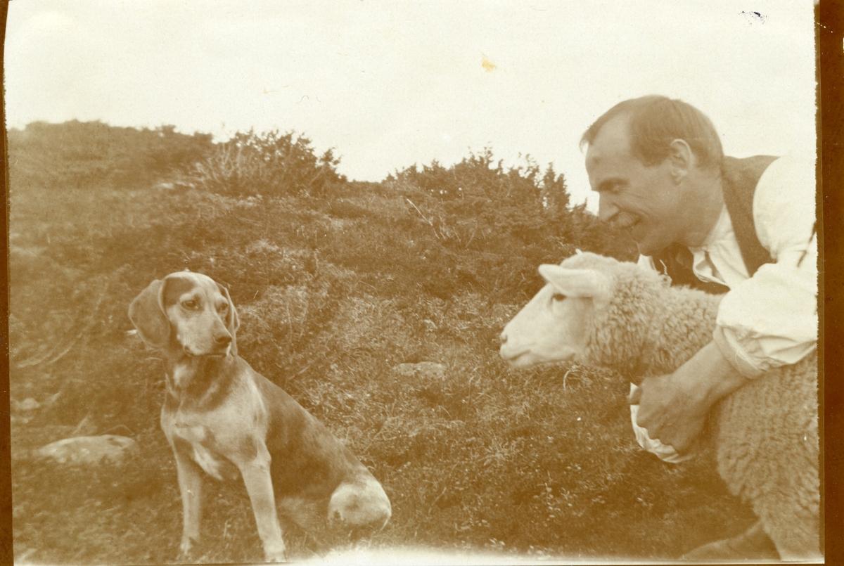 Portrett av Sigurd Islandsmoen sammen med en hund og en sau på Blomstølen.