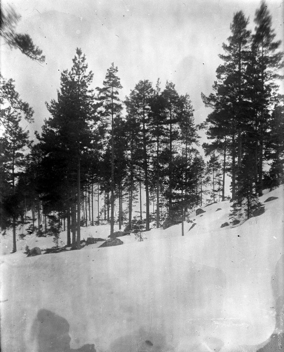Skog i vinterskrud