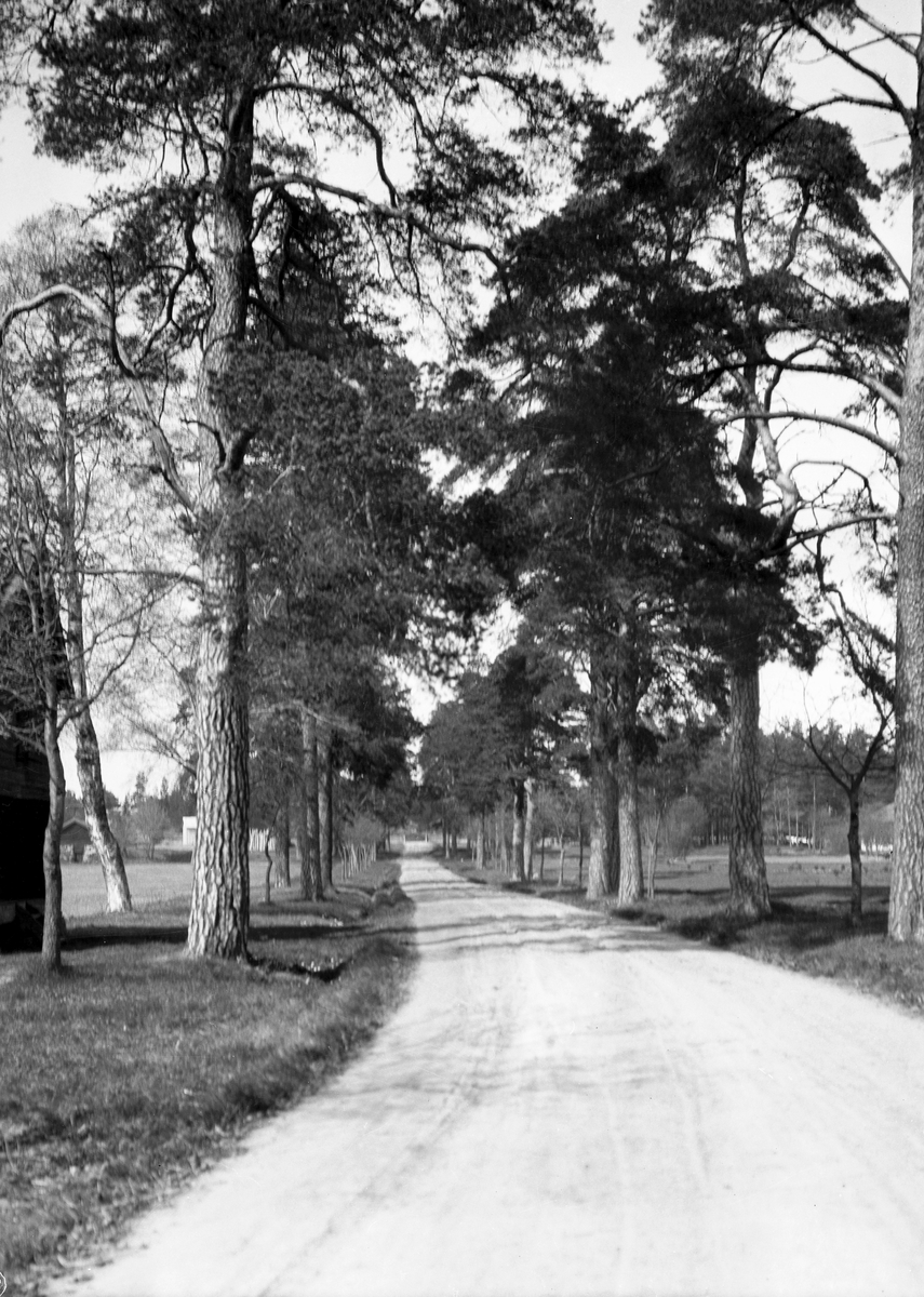 Åby. Allén. Den 28 april 1906.