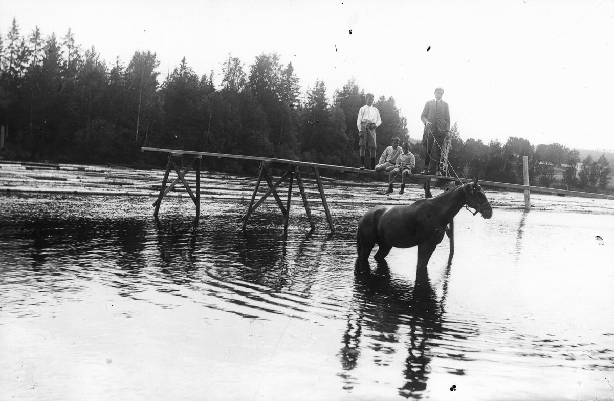 """Anställde ryttmästaren på herrgården badar en häst i """"Brubergsvika"""". På bryggan troligen tre söner Bellander."""