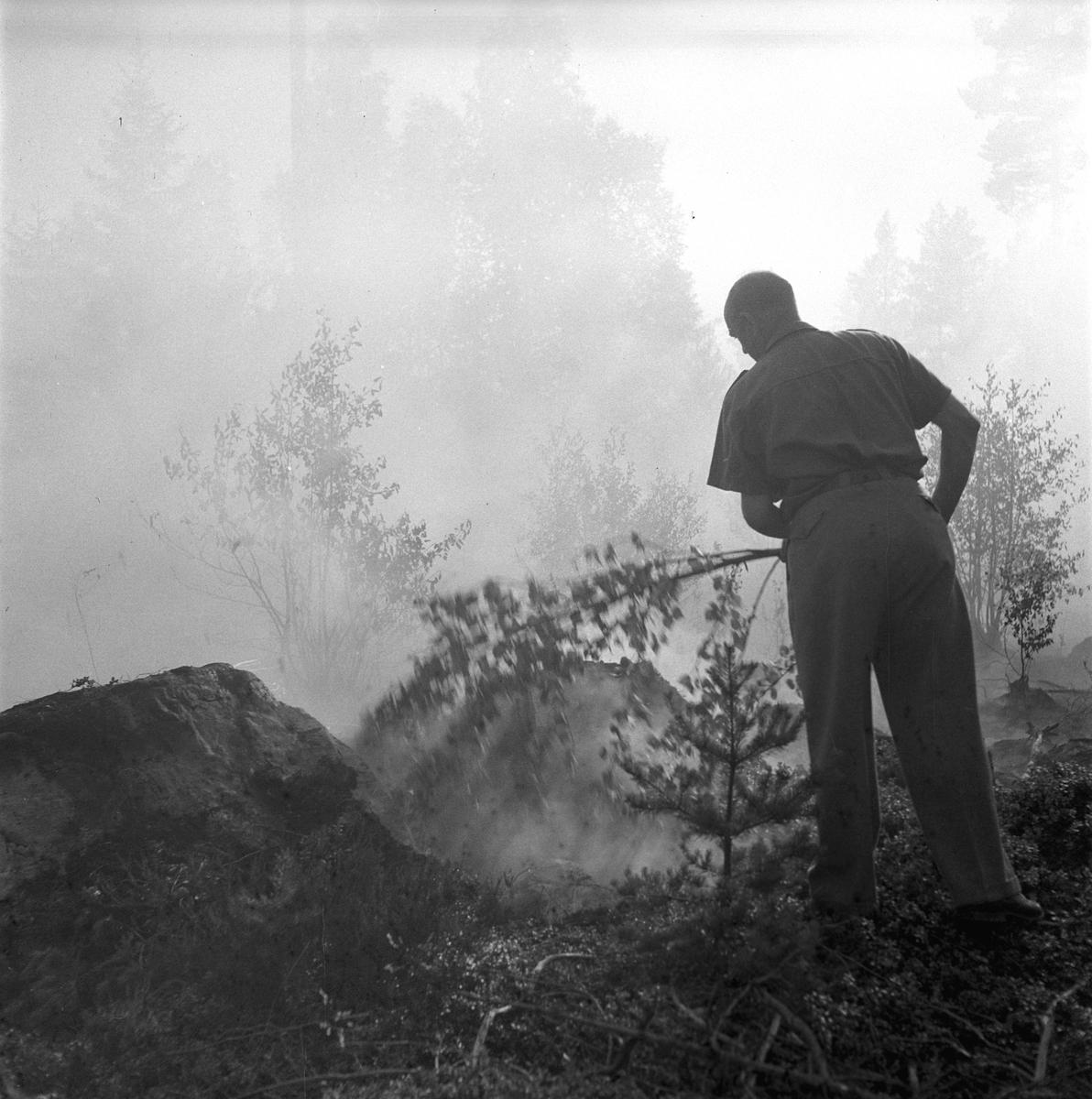 Skogsbrand i Sikvik. 23 juli 1949.