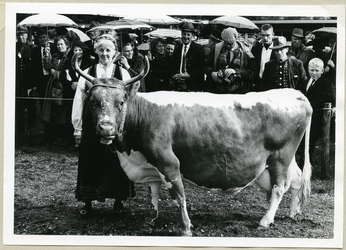 Borghild Glosimot med 12 Teleros 6947.