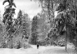 Skiløper i Kallumskogen i Moss.