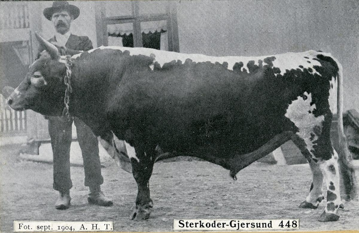 Avlsoksen Sterkoder-Gjersund 448.