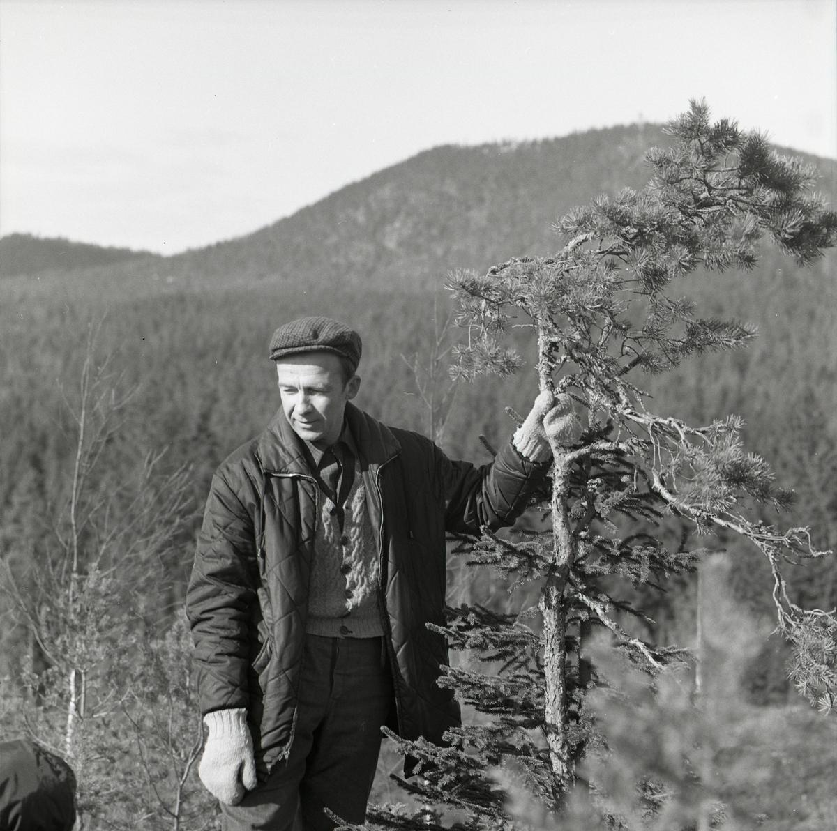 En man står i förgrunden och håller i en liten tall. Mannen bär keps, tjock jacka och stickade vantar. Bakom mannen reser sig berggrunden långsamt till ett berg och på detta växer en tät skog.