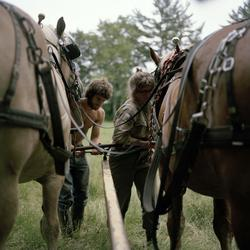 The ideal state (Harnessing the horses before work) [Fotogra