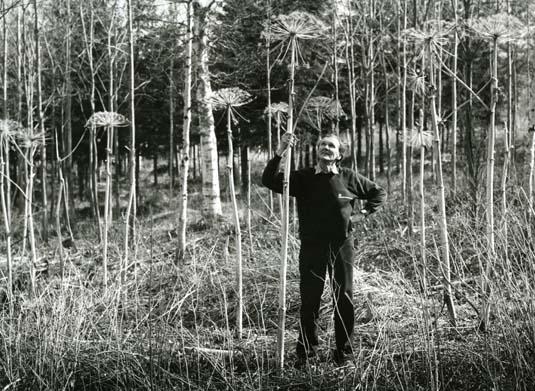 Fotografen Hilding Mickelsson vid Lövtjärns strättor i rekordformat, 1984.