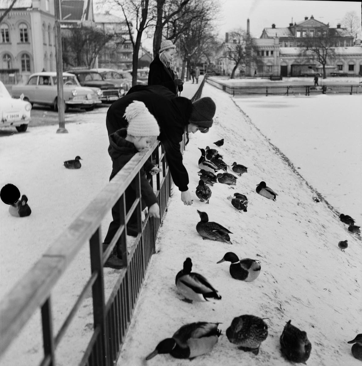"""Svandammen - """"glupskt vid dammen"""", Uppsala 1964"""