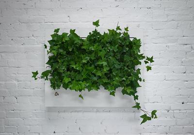 Veggramme med grønne planter, designet av polske Florabo