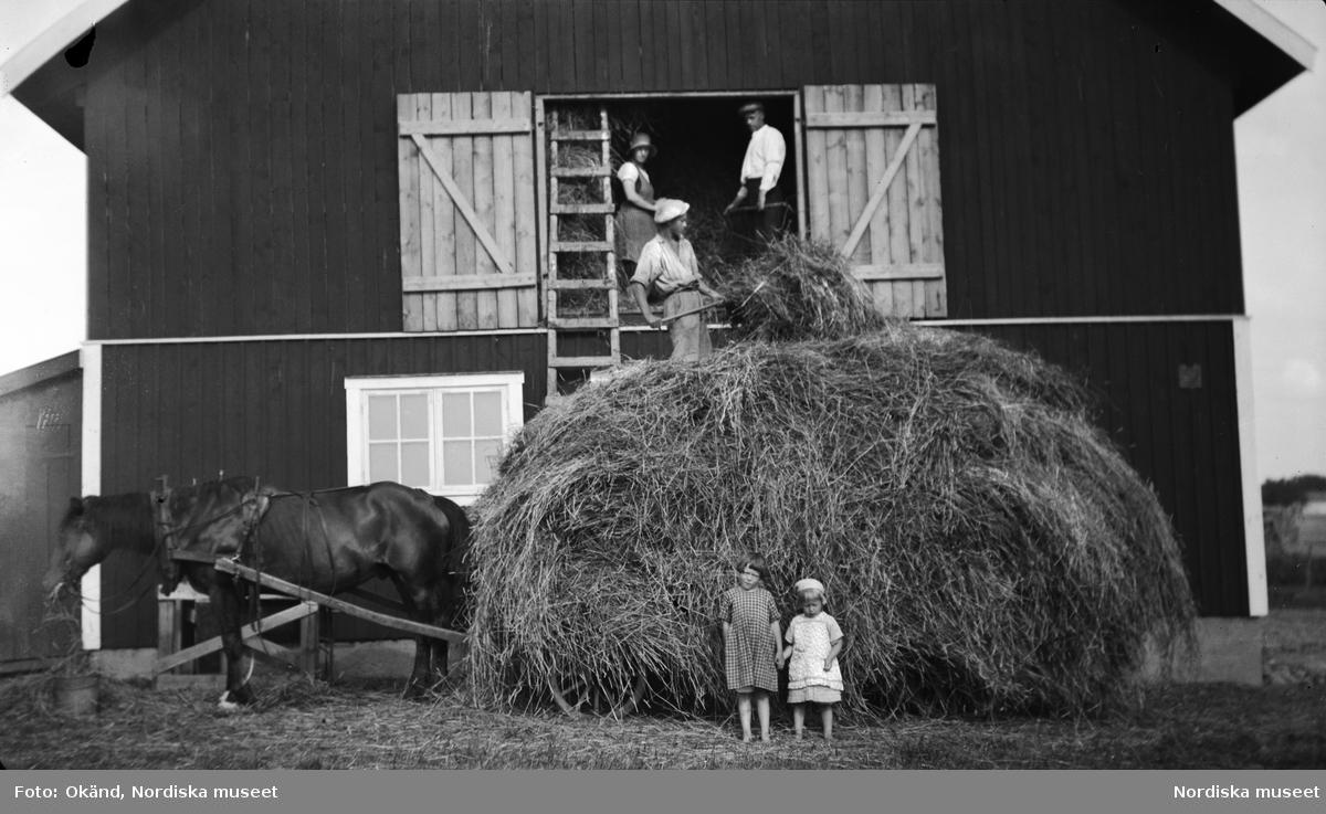 Björkenäs åbolott. Hö lassas in 1937. Häst med vagn framför hölada.