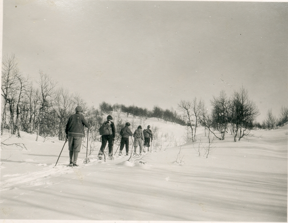 Gruppe på ski. De går på rekke i samme skispor. Bjørkeskog.