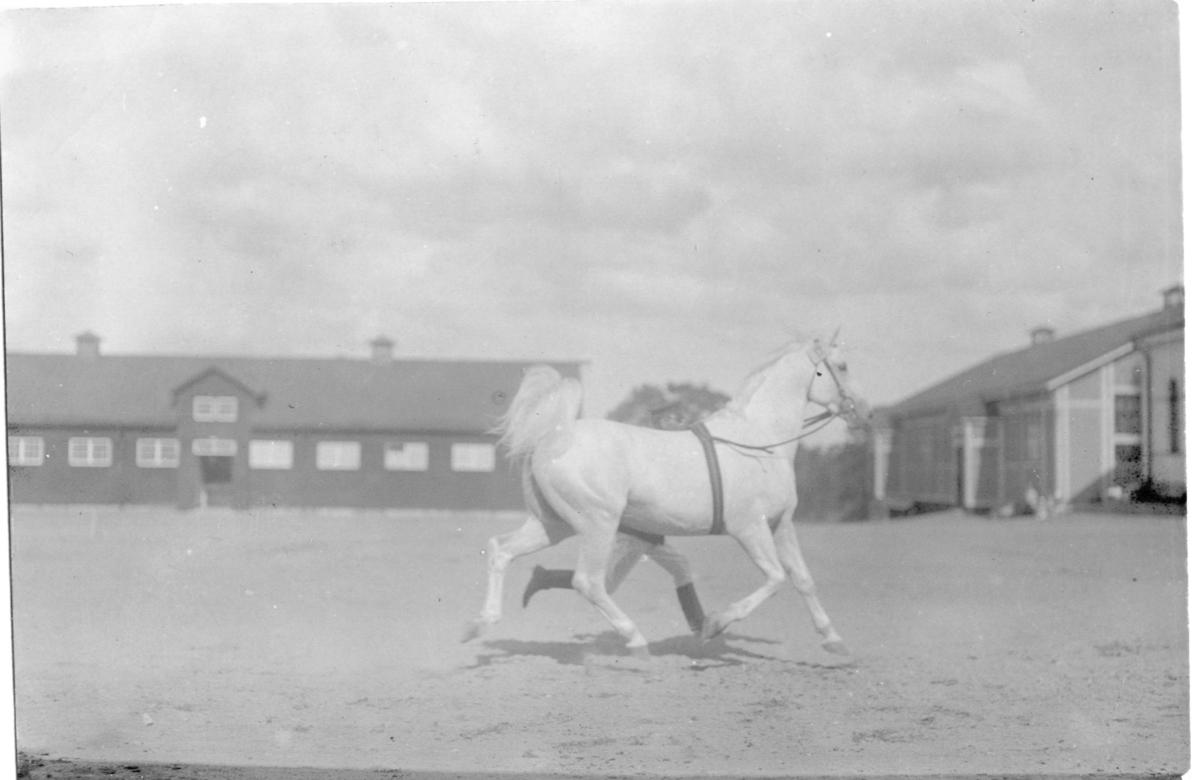 Häst och ryttare.