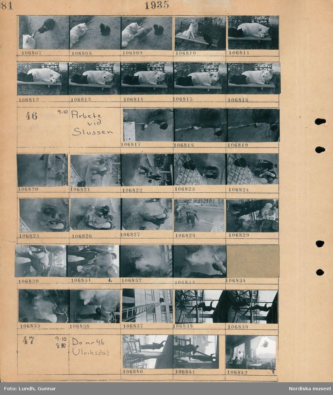 Motiv: Kattfarm på Bagartorps gård (A Nylén) ; En katt och en hund ligger på en parksoffa.  Motiv: Arbete vid Slussen; En man slätar ut asfalt, en grup män arbetar med asfaltläggning, en hög stege står vid ett fönster, en man arbetar på en byggställning.  Motiv: Arbete vid Slussen, Ulriksdal; En man står på en pallbock och arbetar med ett tak, interiör av restaurang Norma vid Kornhamnstorg med gäster.