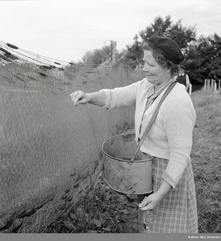 Bild på Marta Cederblad som rensar fiskenät vid Stensö fiskeläge.