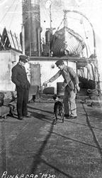 """To av mannskapet på """"Ringborg"""" leker med skipshunden på dekk"""