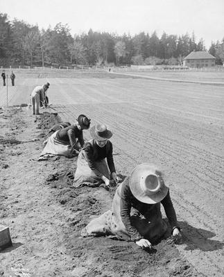 Omplantingsarbeid ved Statens planteskole i Horten, Vestfold.