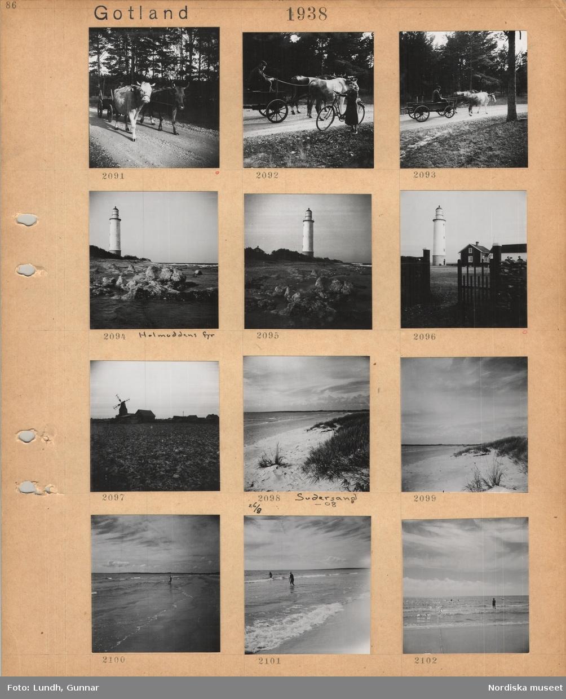 Motiv: Gotland, två oxar drar en kärra på grusväg, en man sitter i kärran, en flicka står med en cykel vid oxkärra, Holmuddens fyr vid stenig havsstrand, stengärdesgård med trägrind, fyr, bostadshus, stenigt fält, i bakgrunden väderkvarn och flera hus, Sudersand, sandig havsstrand med vegetation, badande i långgrunt vatten.