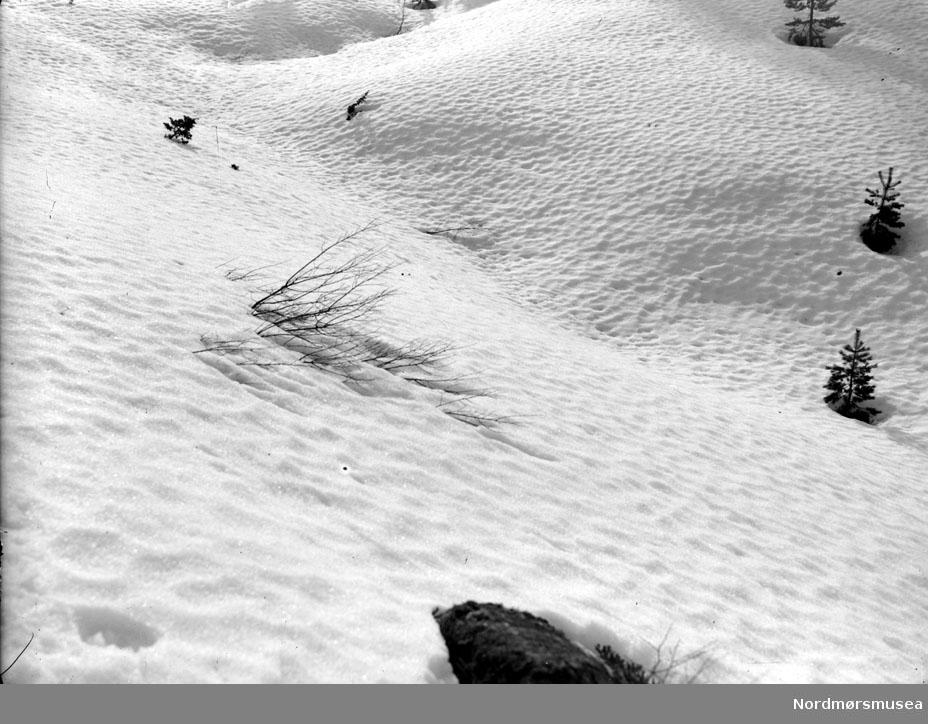 Et forblåst vinterlandskap. Datering usikker. Fra Nordmøre museums fotosamlinger, Myren-arkivet.