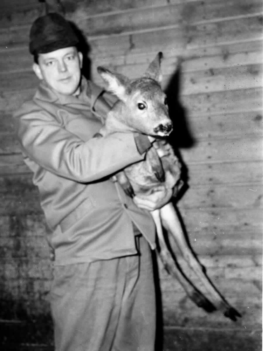 Rådjur tragedier i Delsbo 11/1-1966