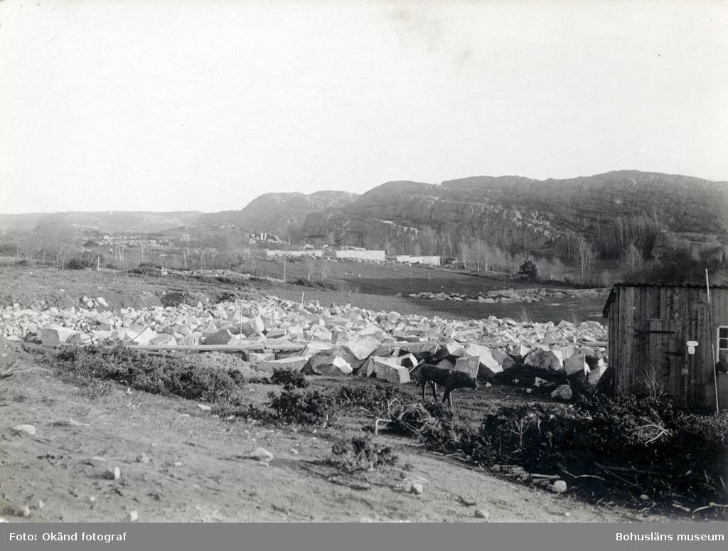 Vy över område med stenblock, i förgrunden går en gris