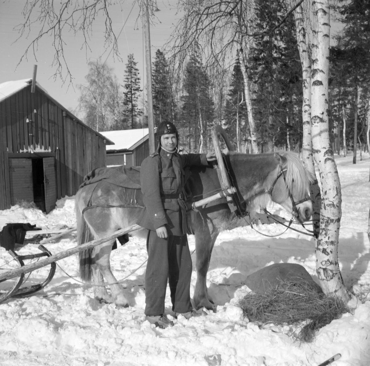 Porträtt av en militär tillhörande Svenska frivilligkåren i Finland, F 19, vid en häst med släde för transport av materiel.