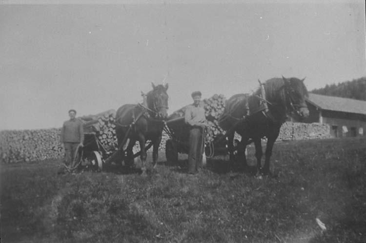 Karl Hansson (till vänster) från Sör-Gåshult och Ivan Berntsson från Hogdal kör gengasvirke från skogen. Hästarna heter Svante och Hero.