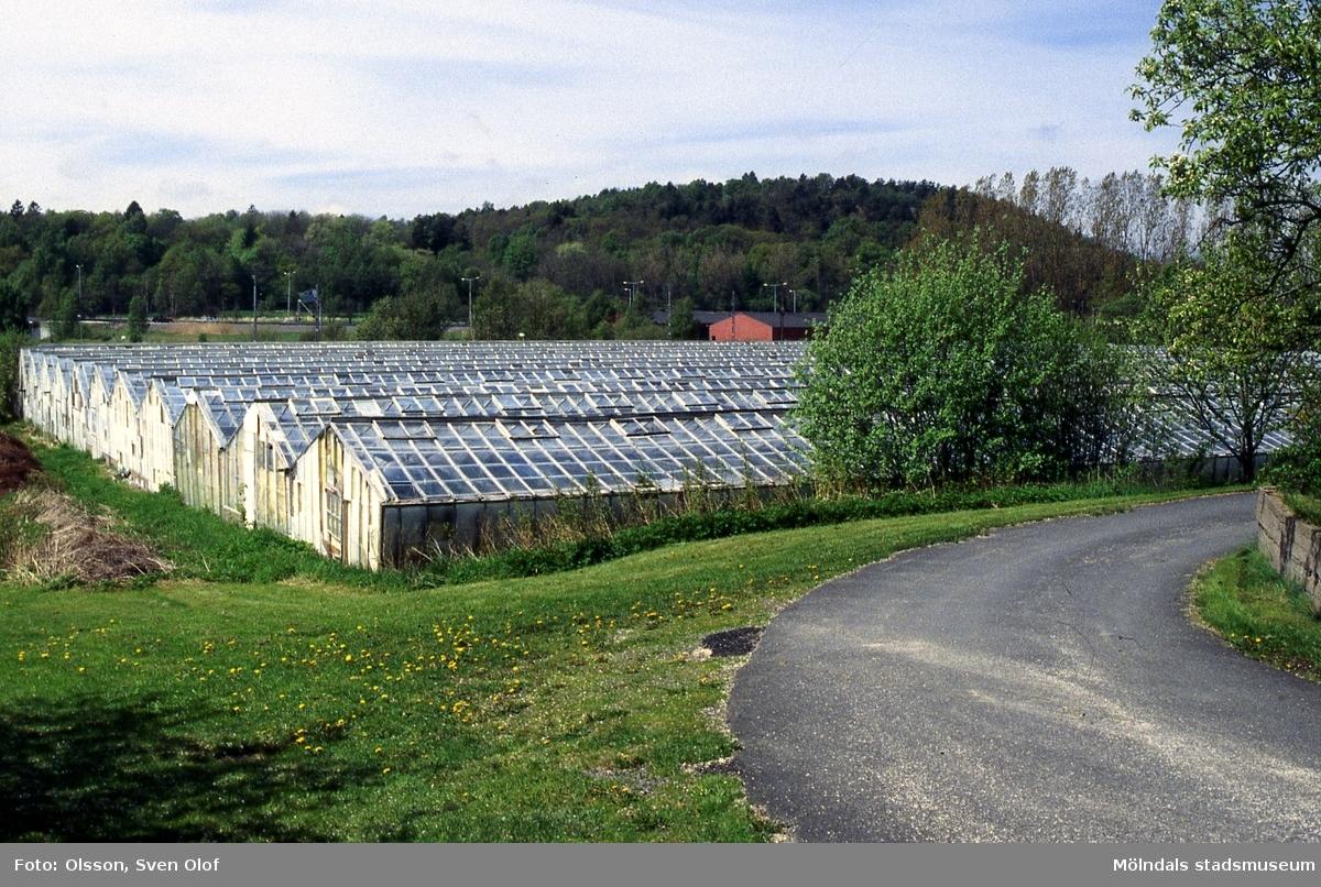 Sandbäck i Mölndal, år 1995. Svanlinds växthus.