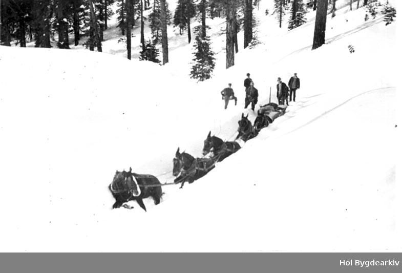 Snøbrøyting, Amerika, hest, muldyr, gruppeU, menn,