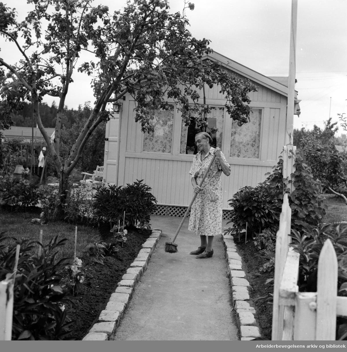 Sogn Kolonihage. August 1959